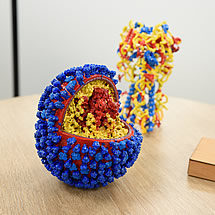 3D models of virus and protein at Algenex's facilities in Tres Cantos (Madrid)